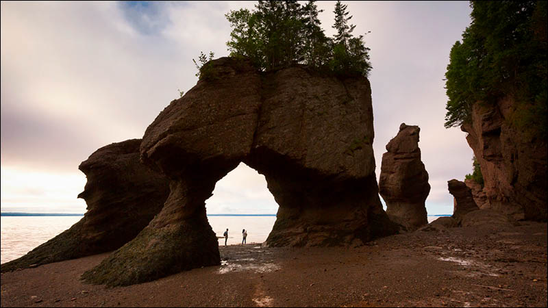 travellers explore bay of fundy at low tide