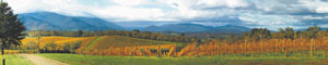 Yarra Valley Wineries and Puffing Billy